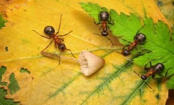 pending approval, three inspectors examine mushroom